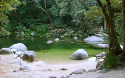 Shinrin Yoku – Neem een bosbad!
